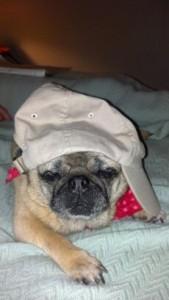 Pug rapper gansta